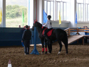 Working Trot with pin element