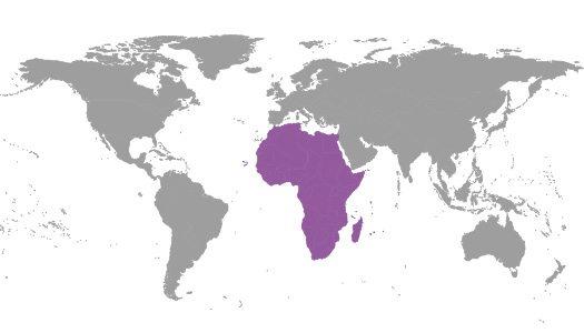 IBE Regional Commitee -Africa