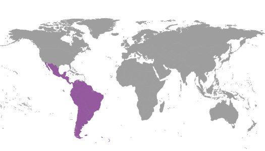 IBE Regional Committee Latin America