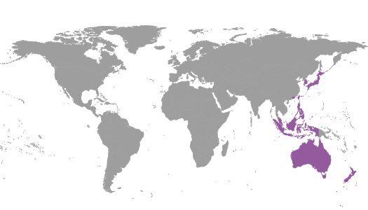 IBE Regional Commitee - Western Pacific