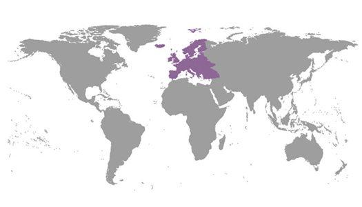 IBE Regional Committees Europe